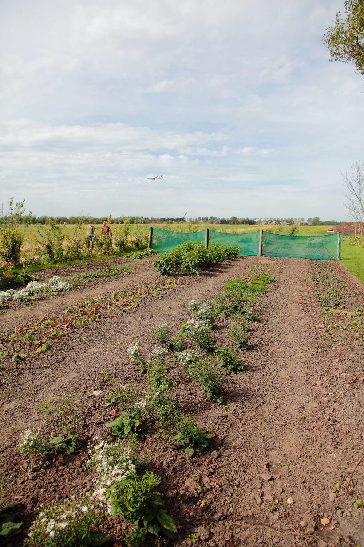 Boerderij de Boterbloem vraagt herziening bestemmingsplan aan voorLutkemeerpolder